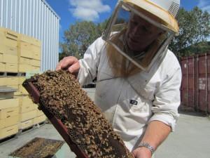 养蜂-和-蜂蜜-生产-Nelson-Honey,-NZ